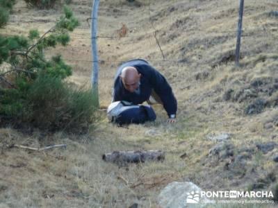 Pico Perdiguera, salvando obstaculos; cañada real segoviana